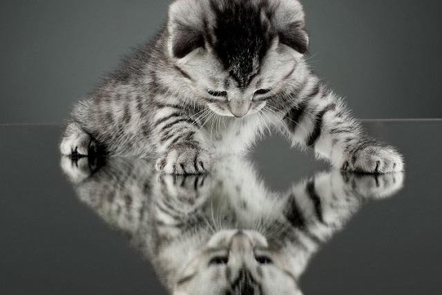 mirror-cat